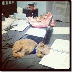 tucker sleeps, i study